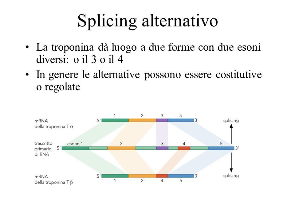 Splicing alternativo La troponina dà luogo a due forme con due esoni diversi: o il 3 o il 4.