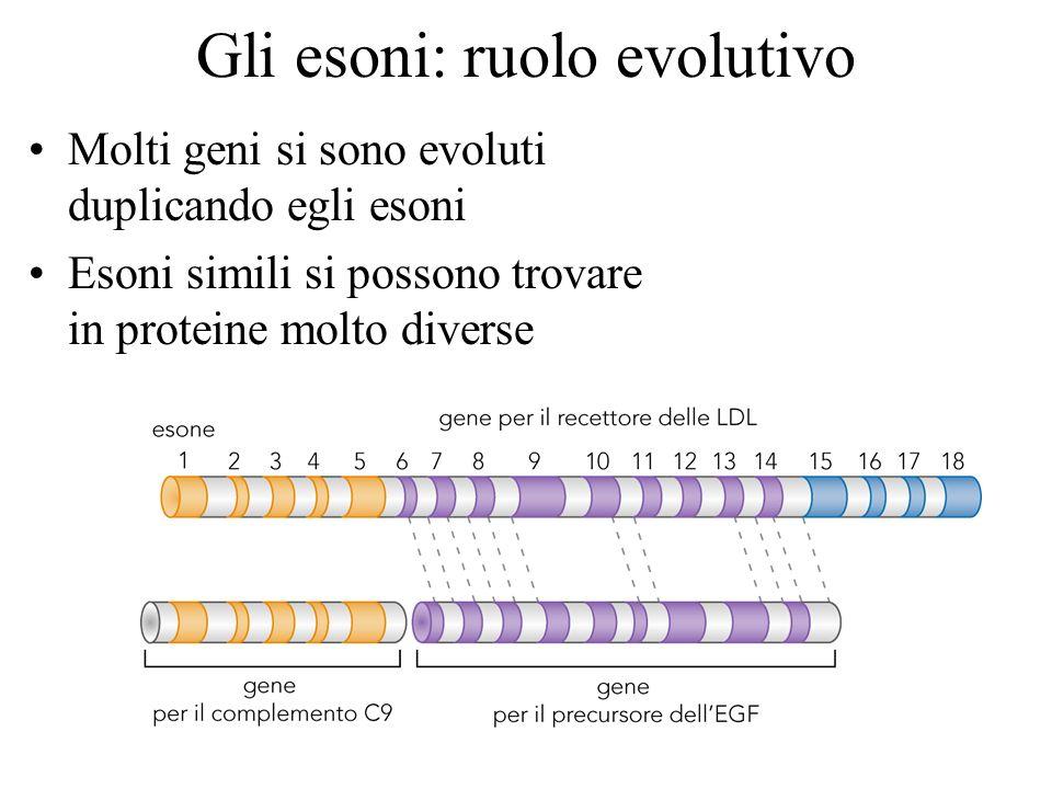 Gli esoni: ruolo evolutivo