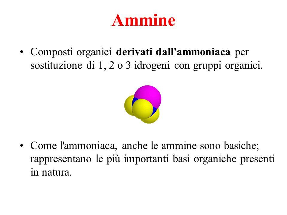 Ammine Composti organici derivati dall ammoniaca per sostituzione di 1, 2 o 3 idrogeni con gruppi organici.