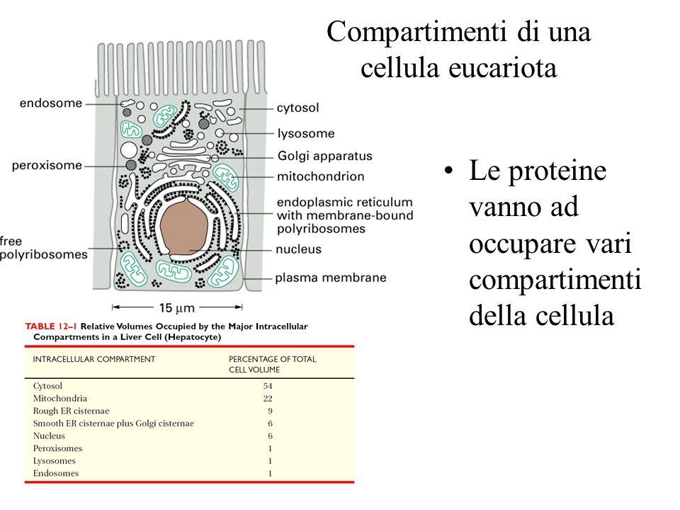 Compartimenti di una cellula eucariota