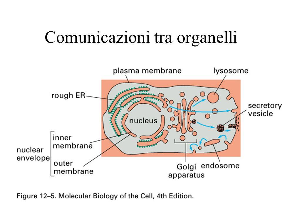 Comunicazioni tra organelli