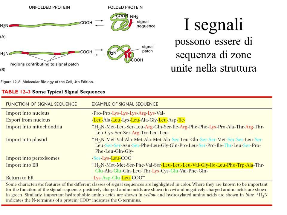 I segnali possono essere di sequenza di zone unite nella struttura