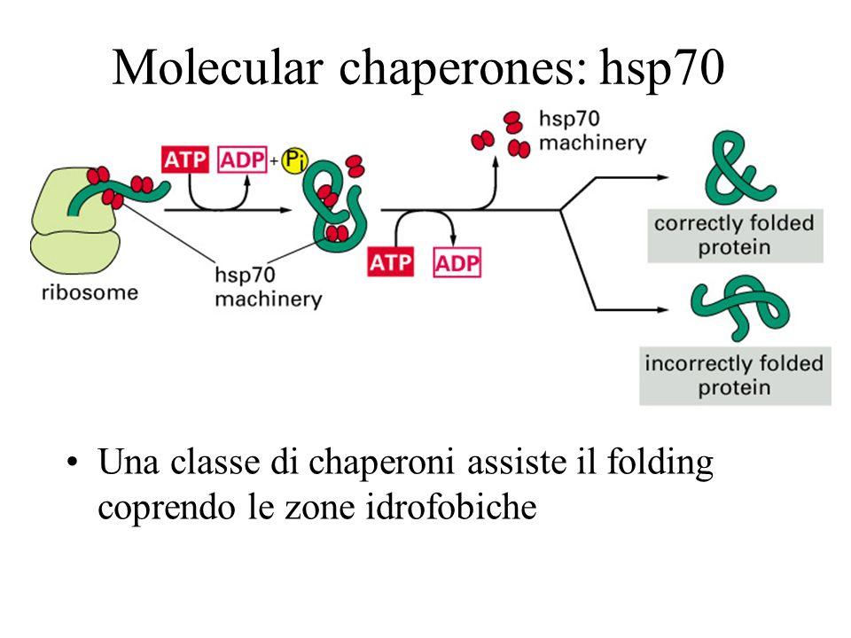 Molecular chaperones: hsp70