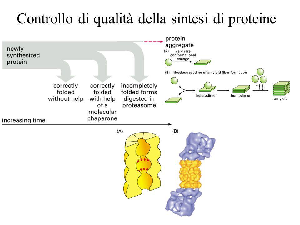 Controllo di qualità della sintesi di proteine