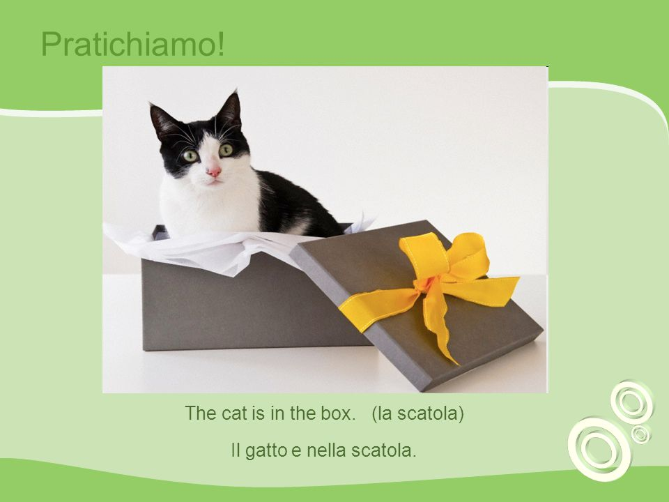 Pratichiamo! The cat is in the box. (la scatola)