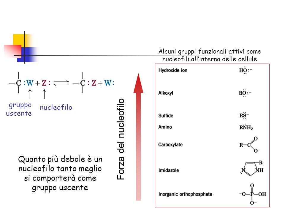 Alcuni gruppi funzionali attivi come nucleofili all'interno delle cellule