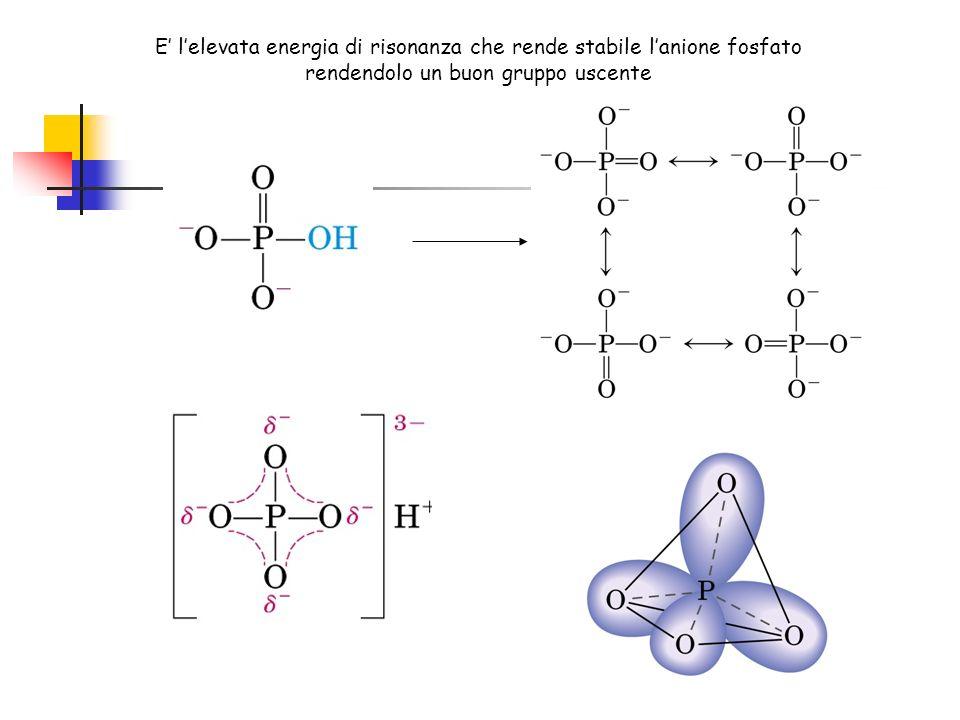 E' l'elevata energia di risonanza che rende stabile l'anione fosfato