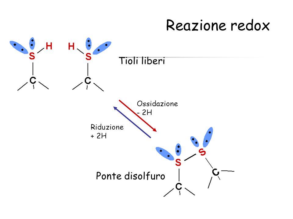 Reazione redox Tioli liberi Ponte disolfuro Ossidazione - 2H Riduzione
