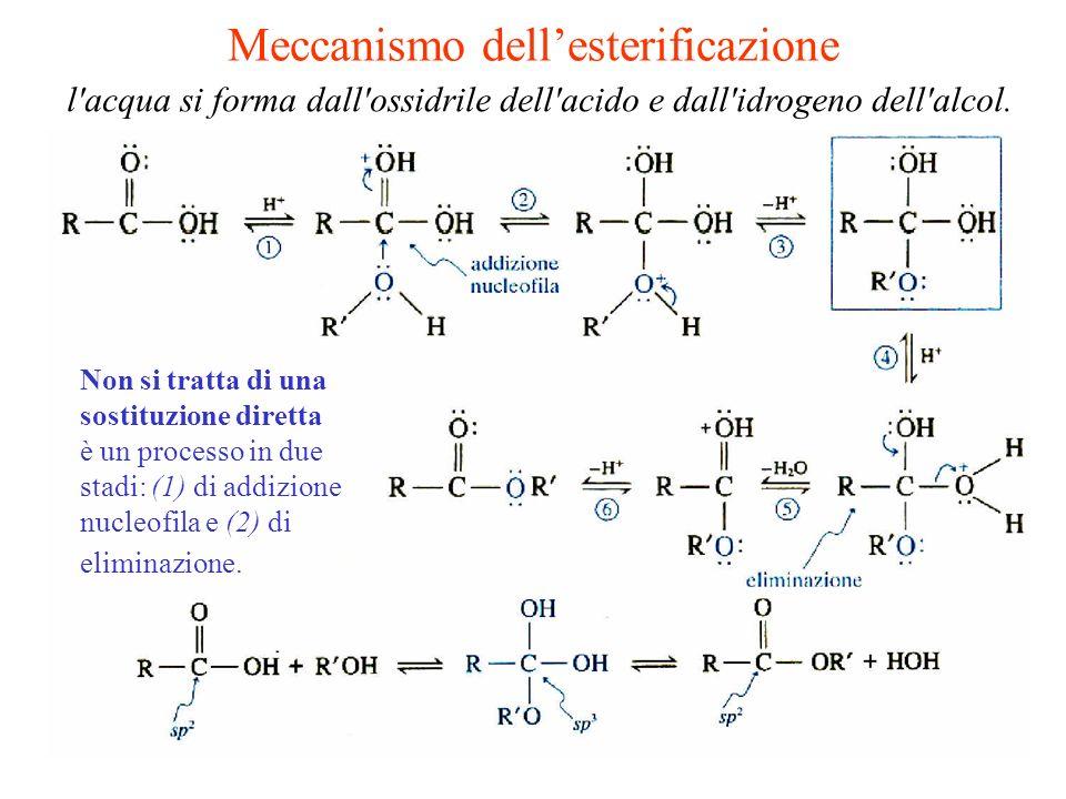 Meccanismo dell'esterificazione