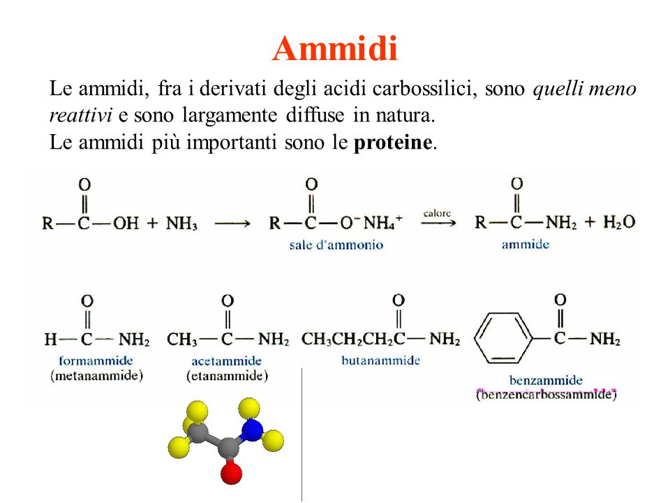 Ammidi Le ammidi, fra i derivati degli acidi carbossilici, sono quelli meno reattivi e sono largamente diffuse in natura.