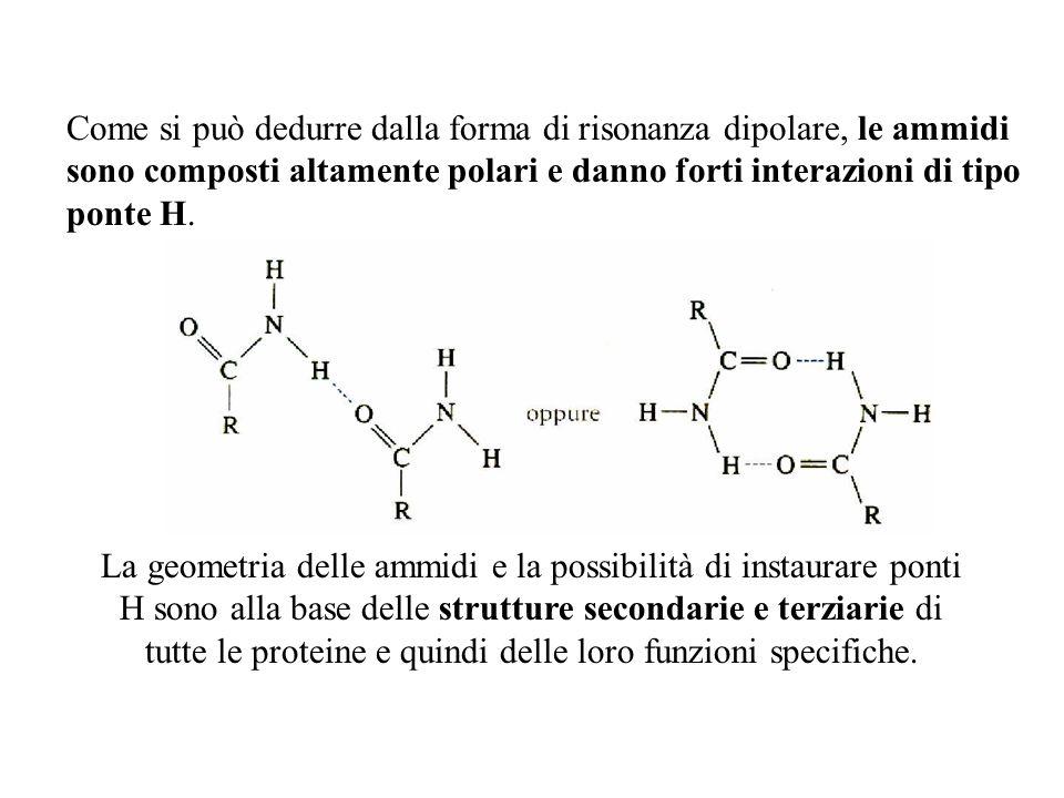 Come si può dedurre dalla forma di risonanza dipolare, le ammidi sono composti altamente polari e danno forti interazioni di tipo ponte H.