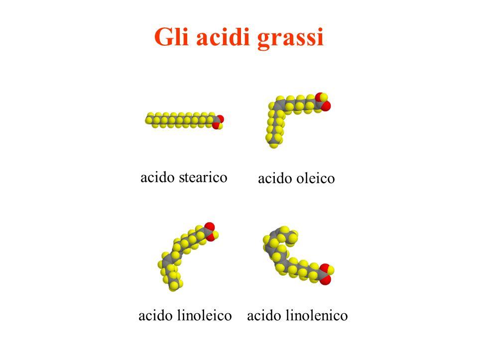 Gli acidi grassi acido stearico acido oleico acido linoleico