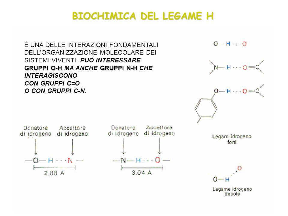 BIOCHIMICA DEL LEGAME H