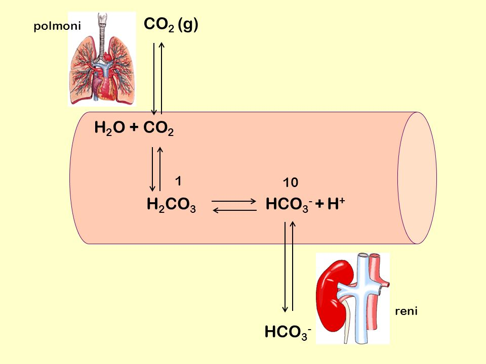 CO2 (g) polmoni H2O + CO2 1 10 H2CO3 HCO3- + H+ reni HCO3-