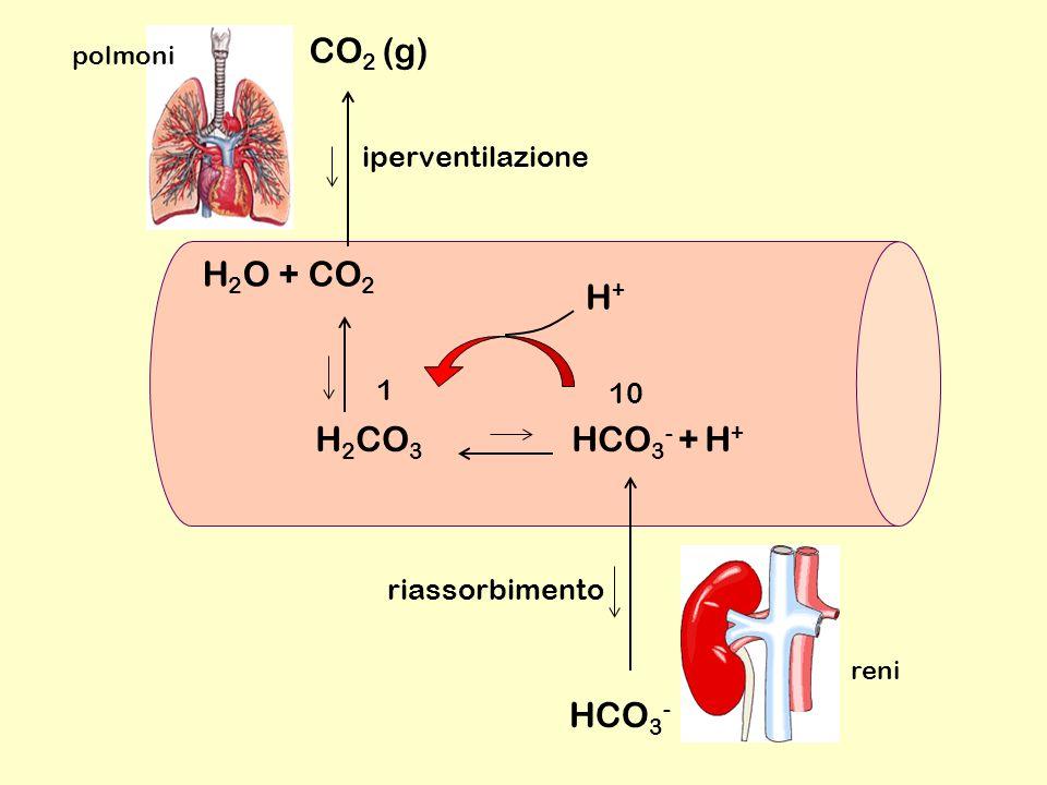 CO2 (g) H2O + CO2 H+ H2CO3 HCO3- + H+ HCO3- iperventilazione 1 10