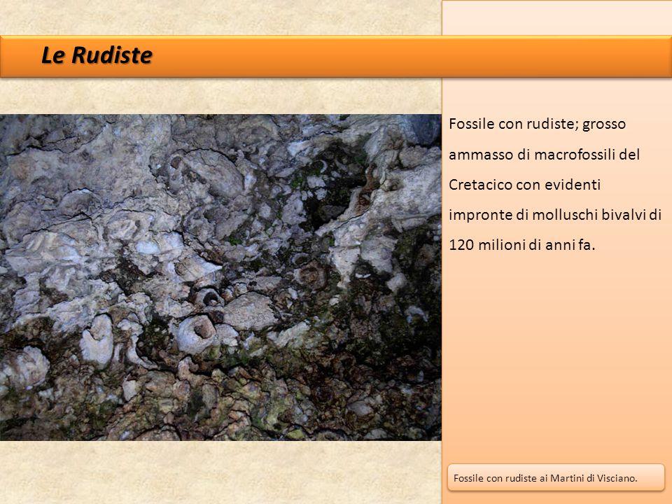 Le Rudiste Fossile con rudiste; grosso ammasso di macrofossili del Cretacico con evidenti impronte di molluschi bivalvi di 120 milioni di anni fa.