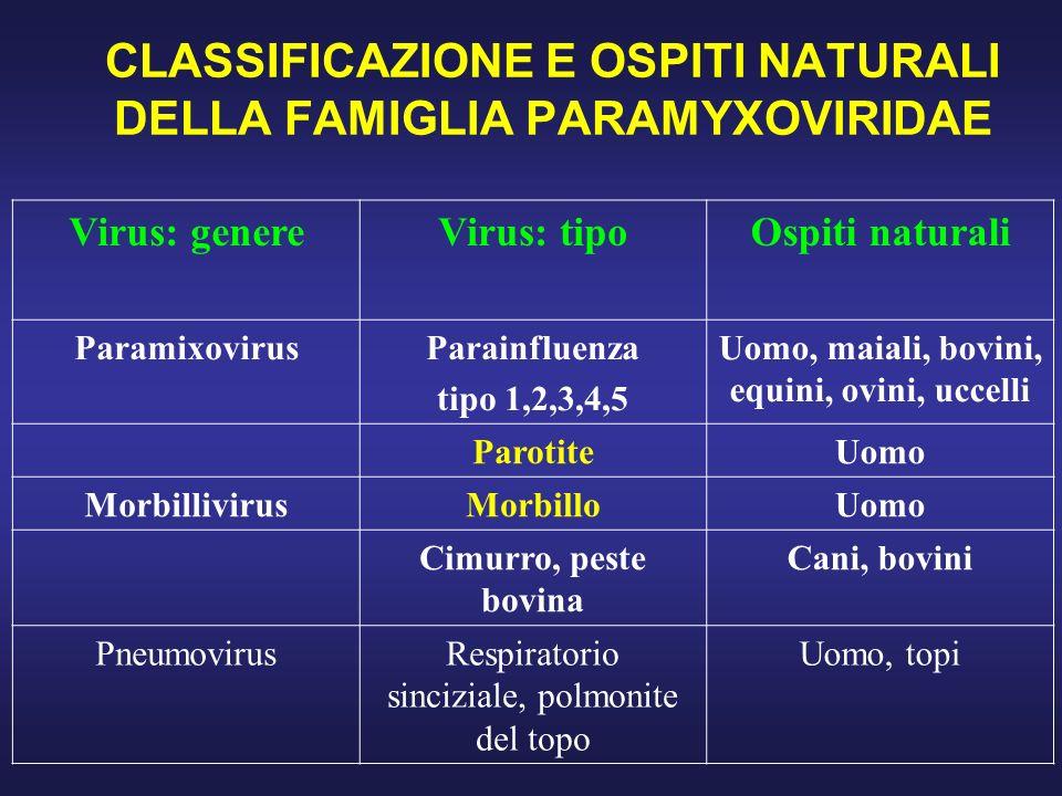 CLASSIFICAZIONE E OSPITI NATURALI DELLA FAMIGLIA PARAMYXOVIRIDAE
