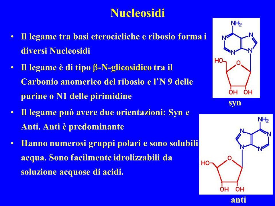 Nucleosidi Il legame tra basi eterocicliche e ribosio forma i diversi Nucleosidi.