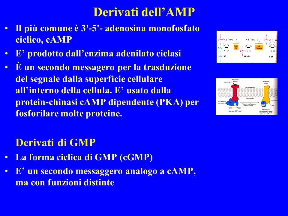 Derivati dell'AMP Derivati di GMP