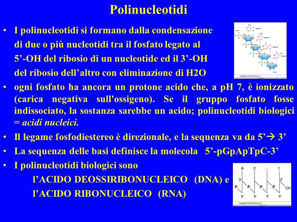 Polinucleotidi I polinucleotidi si formano dalla condensazione