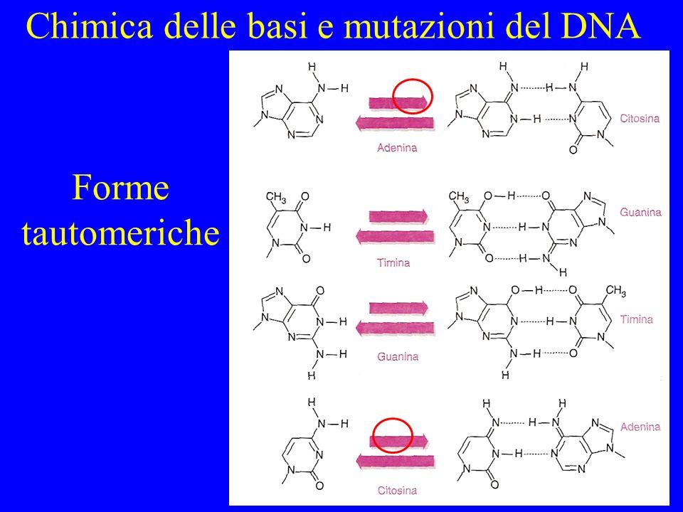 Chimica delle basi e mutazioni del DNA