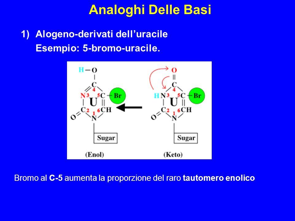 Analoghi Delle Basi Alogeno-derivati dell'uracile