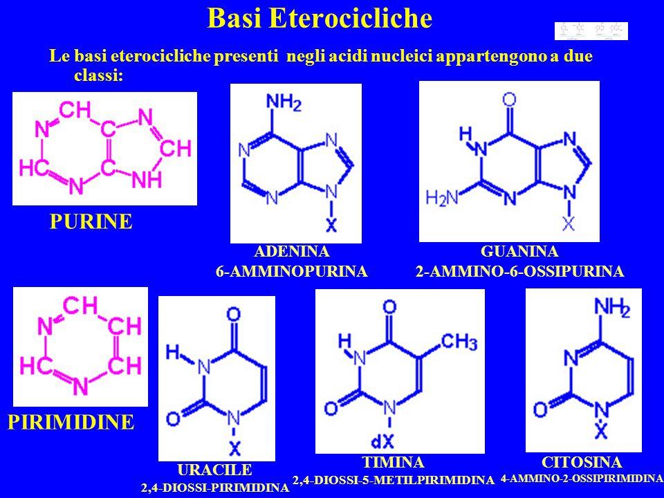 2,4-DIOSSI-5-METILPIRIMIDINA 4-AMMINO-2-OSSIPIRIMIDINA