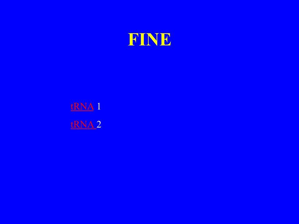 FINE tRNA 1 tRNA 2