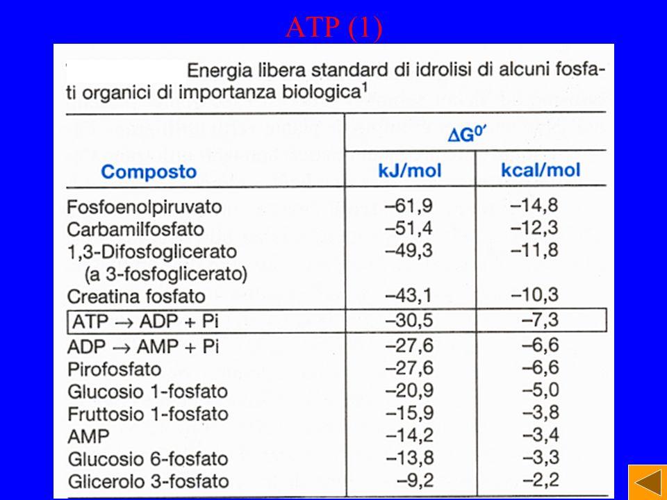 ATP (1)