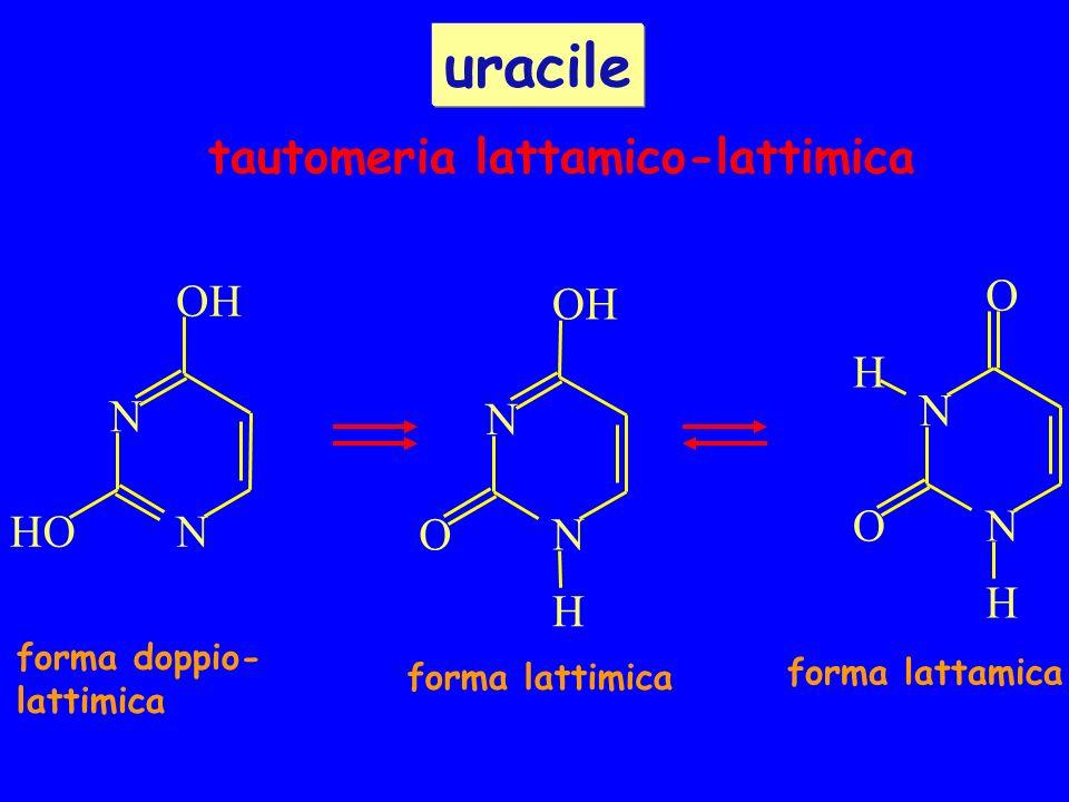 uracile tautomeria lattamico-lattimica O H O O H H N N N H O N O N O N