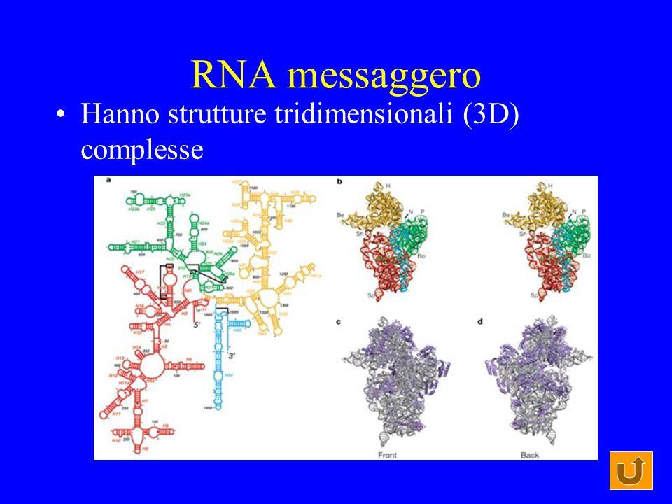RNA messaggero Hanno strutture tridimensionali (3D) complesse