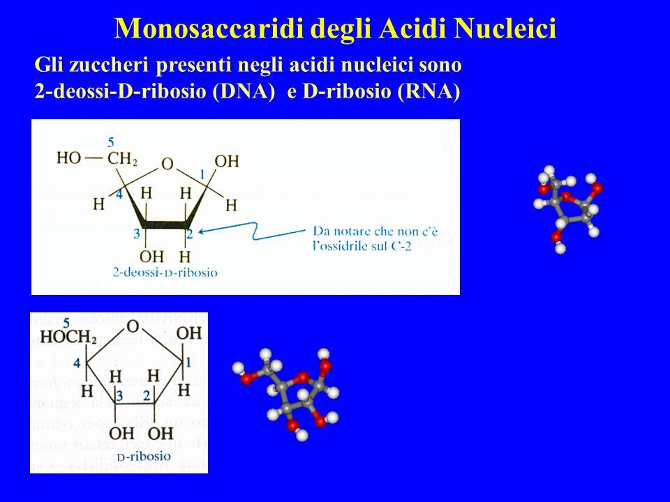 Monosaccaridi degli Acidi Nucleici