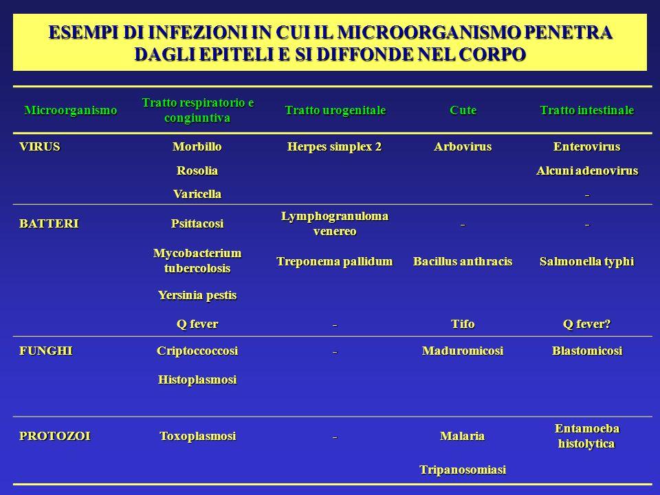 ESEMPI DI INFEZIONI IN CUI IL MICROORGANISMO PENETRA DAGLI EPITELI E SI DIFFONDE NEL CORPO