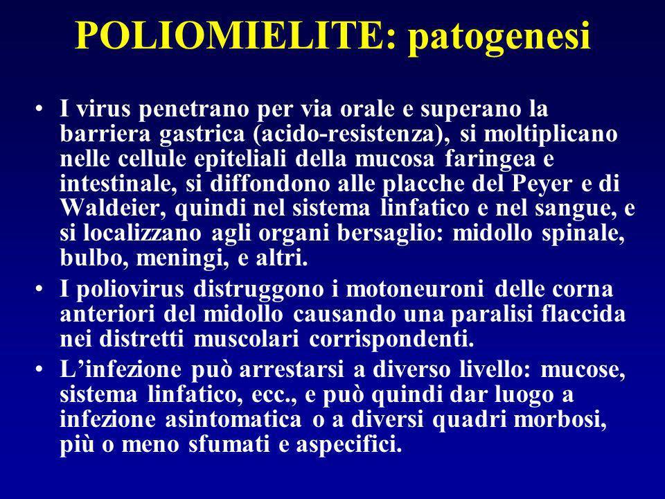 POLIOMIELITE: patogenesi