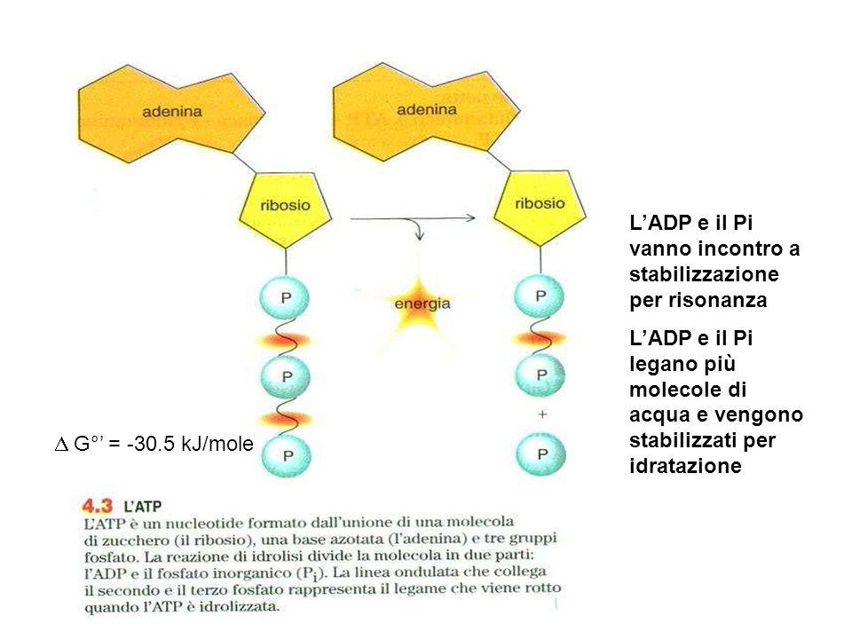 L'ADP e il Pi vanno incontro a stabilizzazione per risonanza