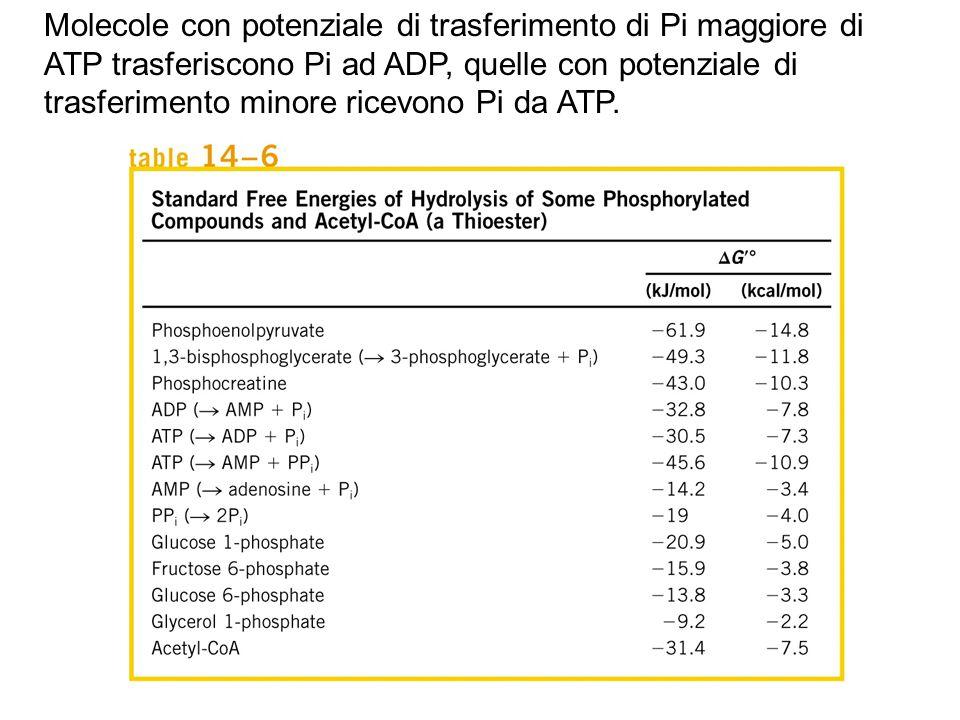 Molecole con potenziale di trasferimento di Pi maggiore di ATP trasferiscono Pi ad ADP, quelle con potenziale di trasferimento minore ricevono Pi da ATP.