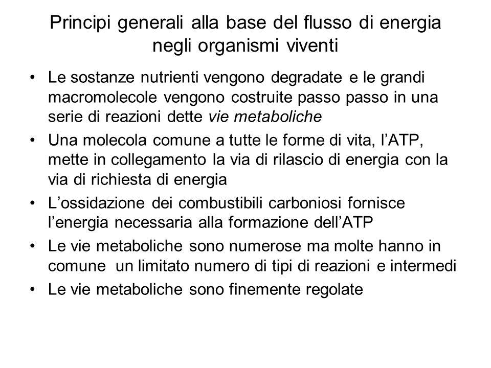 Principi generali alla base del flusso di energia negli organismi viventi