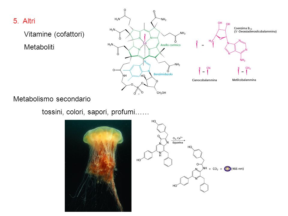 5. Altri Vitamine (cofattori) Metaboliti Metabolismo secondario tossini, colori, sapori, profumi……
