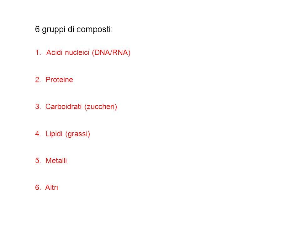 6 gruppi di composti: Acidi nucleici (DNA/RNA) 2. Proteine