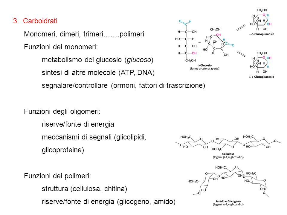 3. Carboidrati Monomeri, dimeri, trimeri…….polimeri. Funzioni dei monomeri: metabolismo del glucosio (glucoso)