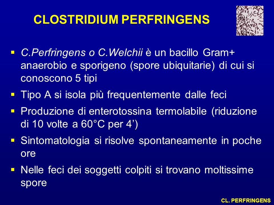 CLOSTRIDIUM PERFRINGENS