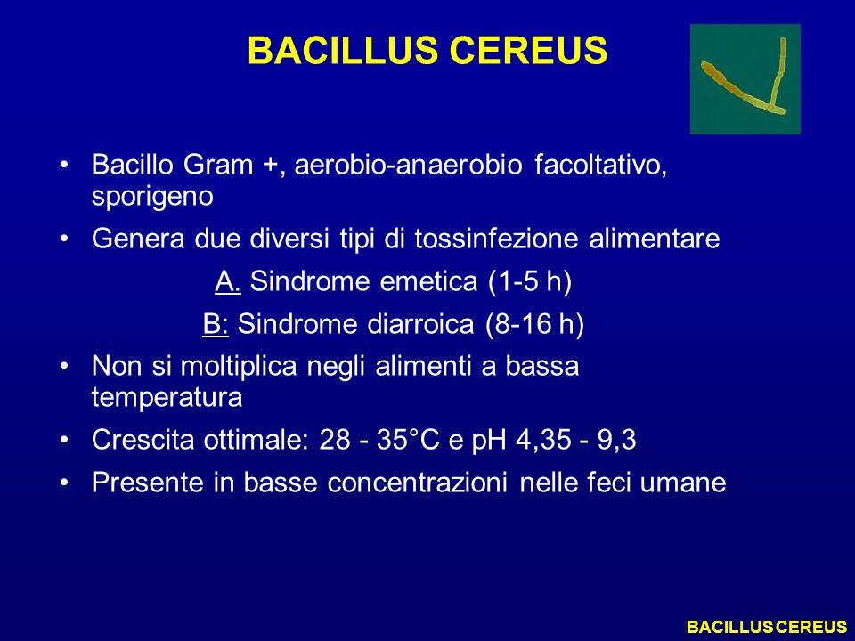 BACILLUS CEREUS Bacillo Gram +, aerobio-anaerobio facoltativo, sporigeno. Genera due diversi tipi di tossinfezione alimentare.