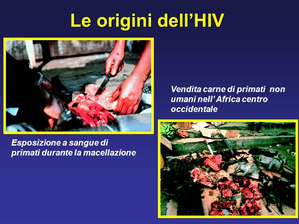 Le origini dell'HIV Vendita carne di primati non umani nell' Africa centro occidentale.