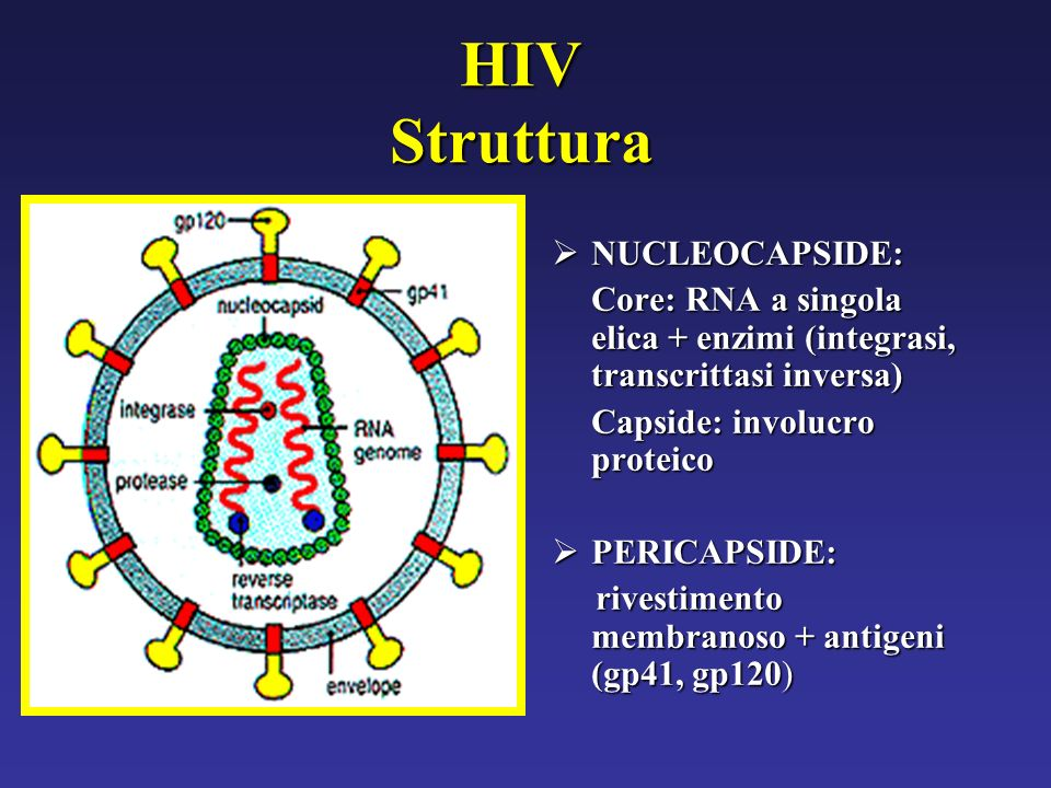 HIV Struttura NUCLEOCAPSIDE: