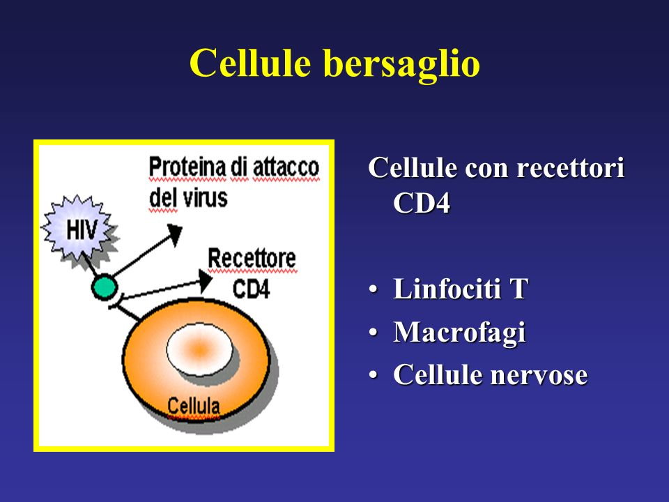 Cellule bersaglio Cellule con recettori CD4 Linfociti T Macrofagi
