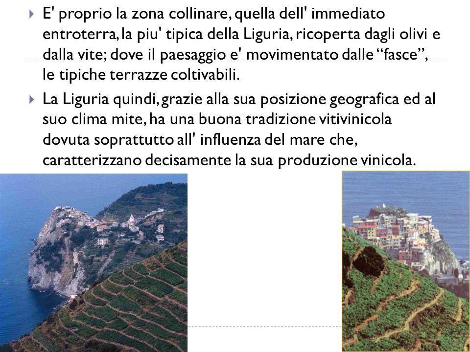 E proprio la zona collinare, quella dell immediato entroterra, la piu tipica della Liguria, ricoperta dagli olivi e dalla vite; dove il paesaggio e movimentato dalle fasce , le tipiche terrazze coltivabili.