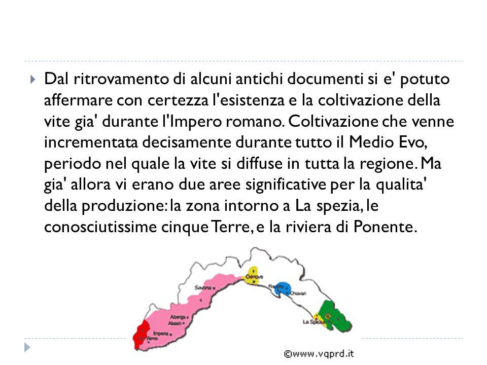 Dal ritrovamento di alcuni antichi documenti si e potuto affermare con certezza l esistenza e la coltivazione della vite gia durante l Impero romano.