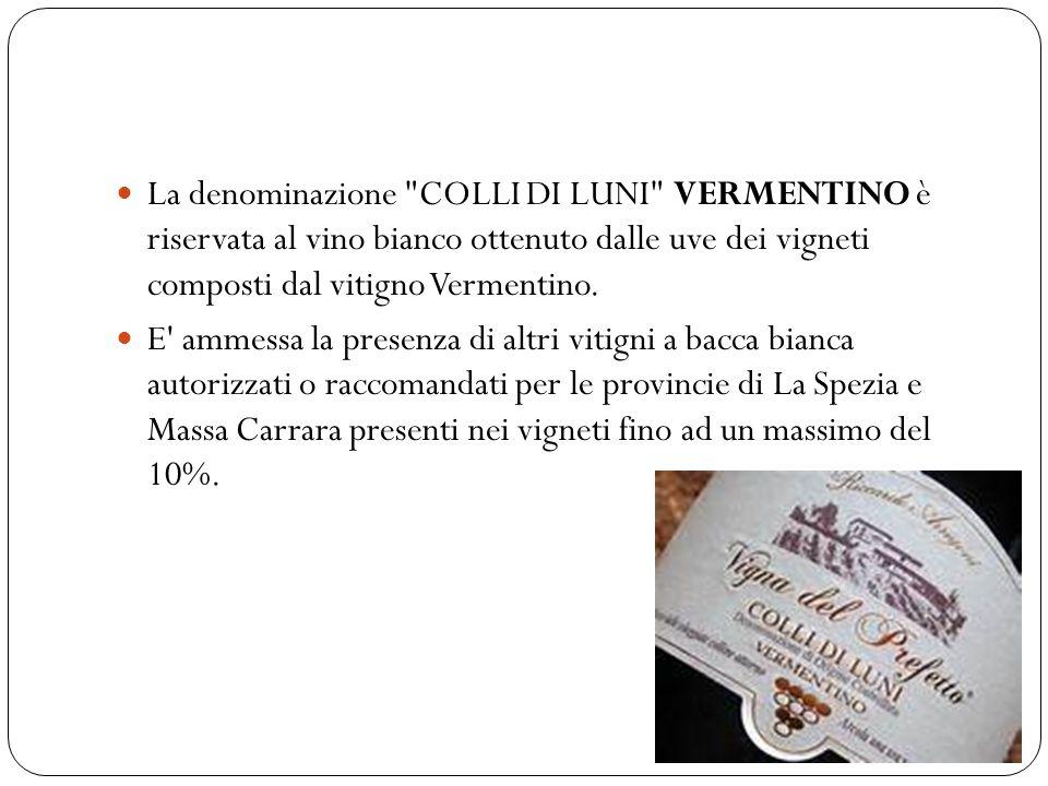 La denominazione COLLI DI LUNI VERMENTINO è riservata al vino bianco ottenuto dalle uve dei vigneti composti dal vitigno Vermentino.