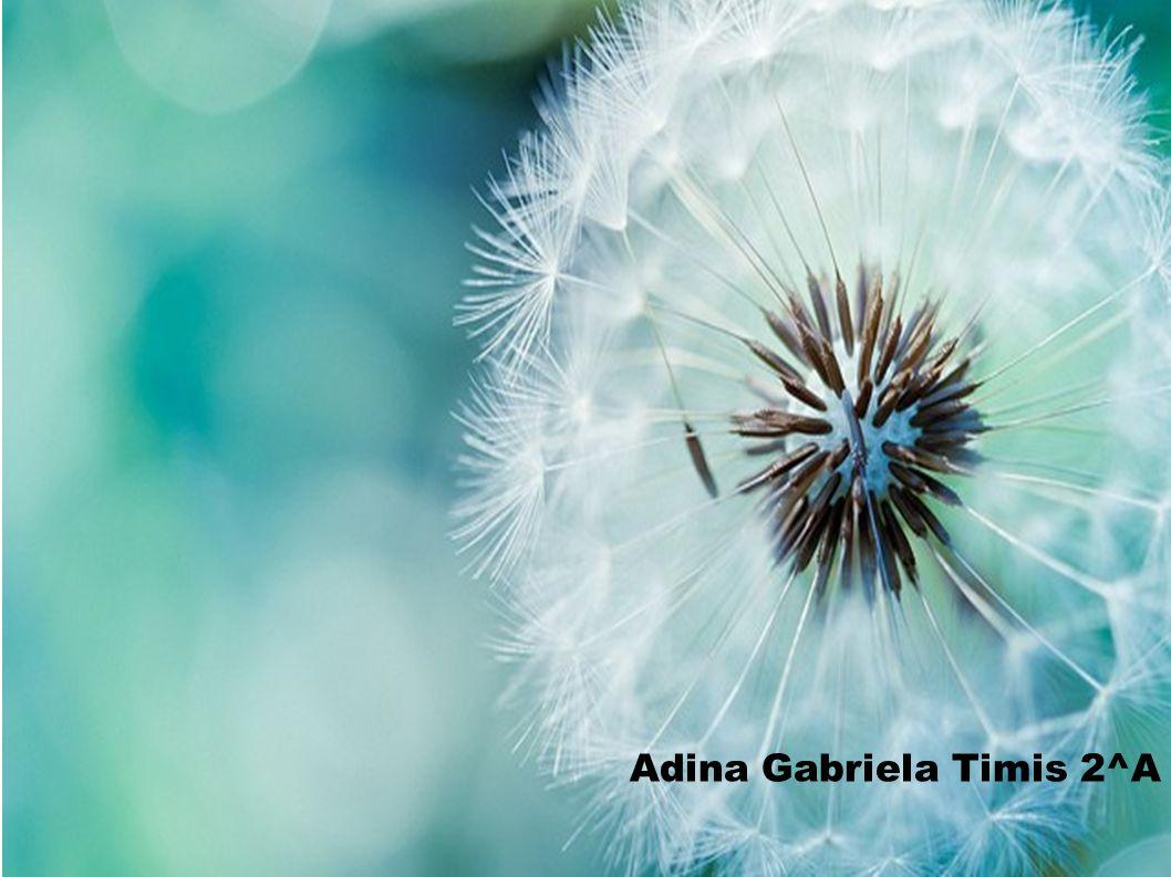Adina Gabriela Timis 2^A