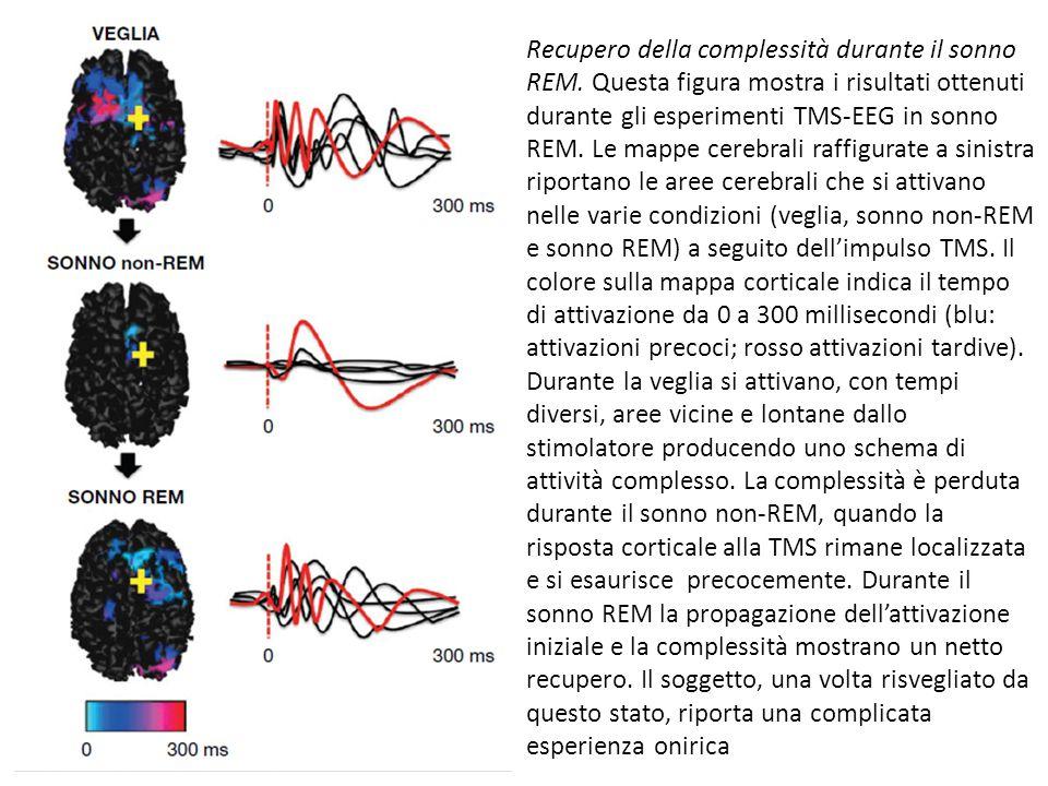 Recupero della complessità durante il sonno REM